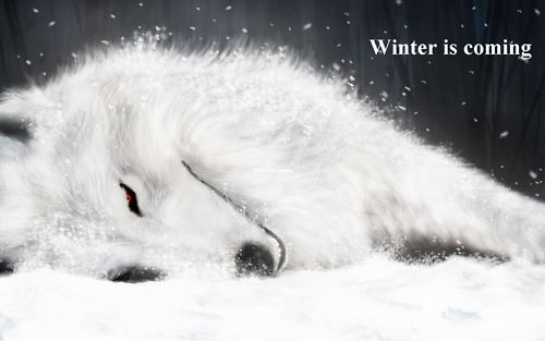 Dire Wolf Wolf Wallpaper Rain Wallpapers Fantasy Wolf