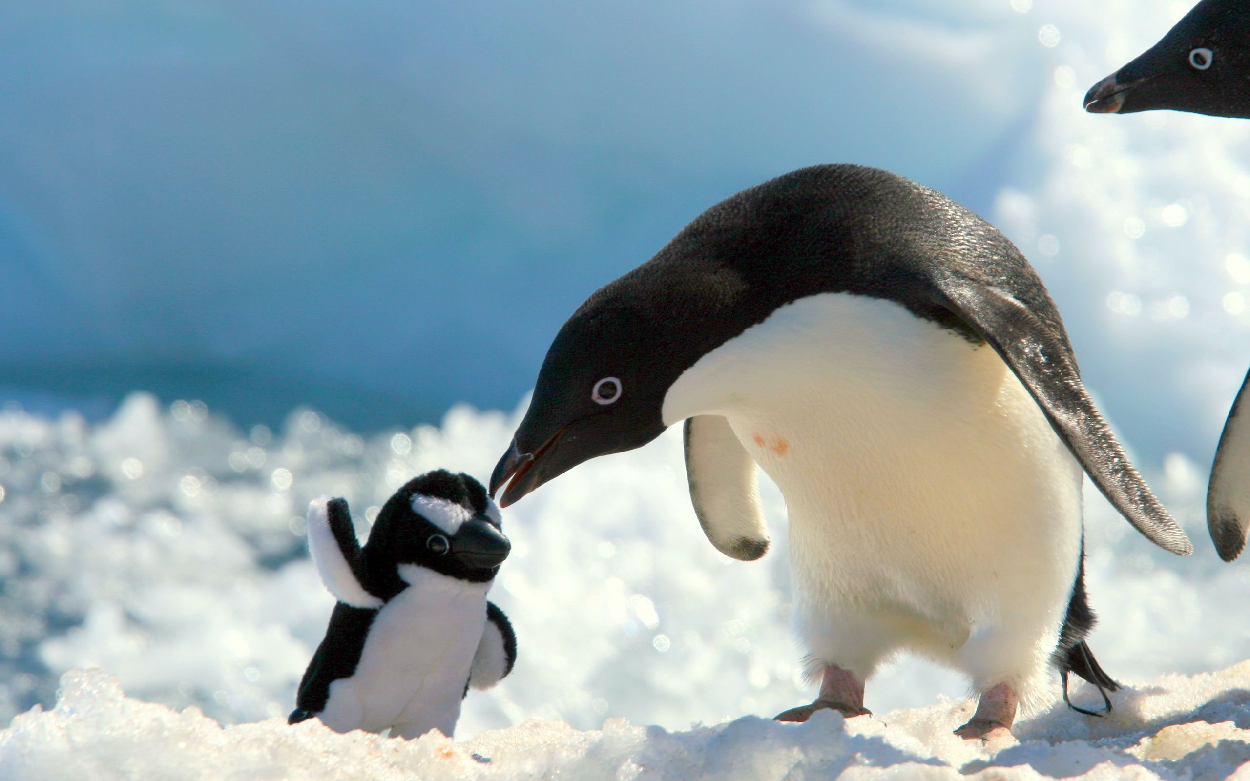 Baby Penguin Pictures