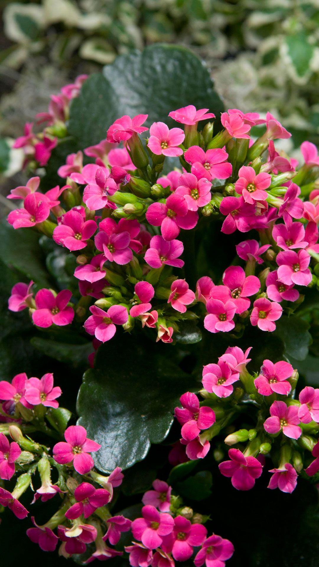 Water Retaining Plants : Flowering succulent house plants design decoration