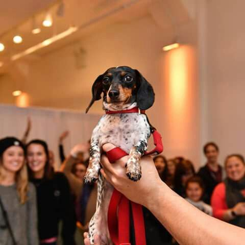 At New York New York Cute Animals Cute Dogs Dogs Weenie Dogs