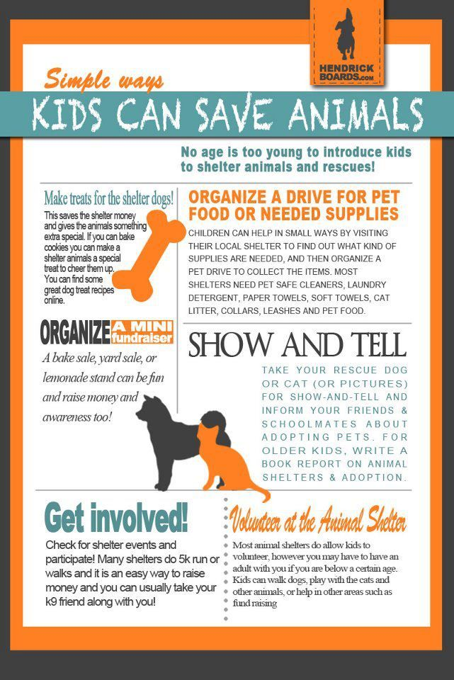 Pin By Gretchen Schiddel On Kids Childcare Save Animals Animal Shelter Humane Education