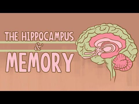 A TED-Ed Animation Describing the Hippocampus Region of the Brain ...