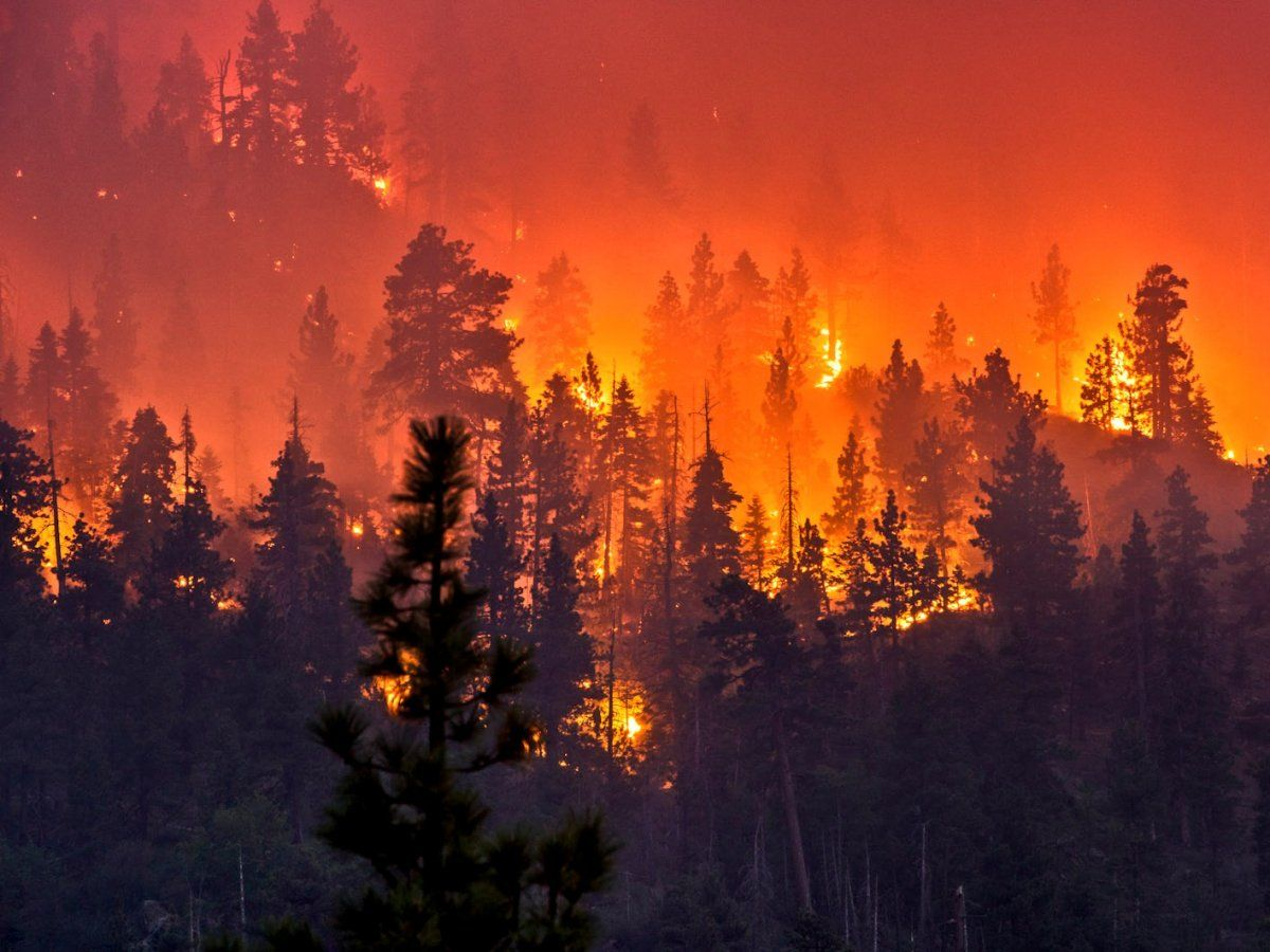 So sick of all these fires! Prayers for everyone affected by all the fires going on! Going out to help evac animals again for the Bluecut Fire heading west at the moment and we are West. Grew 3000 acres in 45 min so it's at 5500 now. Zero containment