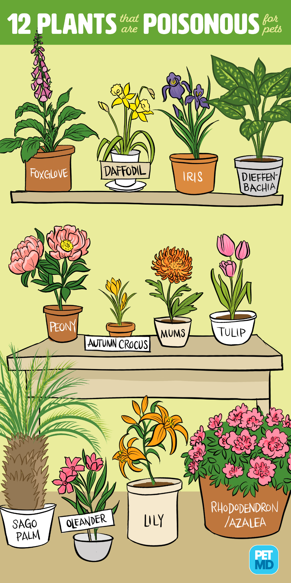 12 Plants That Are Poisonous For Dogs And Cats Petmd Cats Dogs Petmd Plants Poisonous In 2020 Cat Plants Toxic Plants For Cats Dog Safe Plants