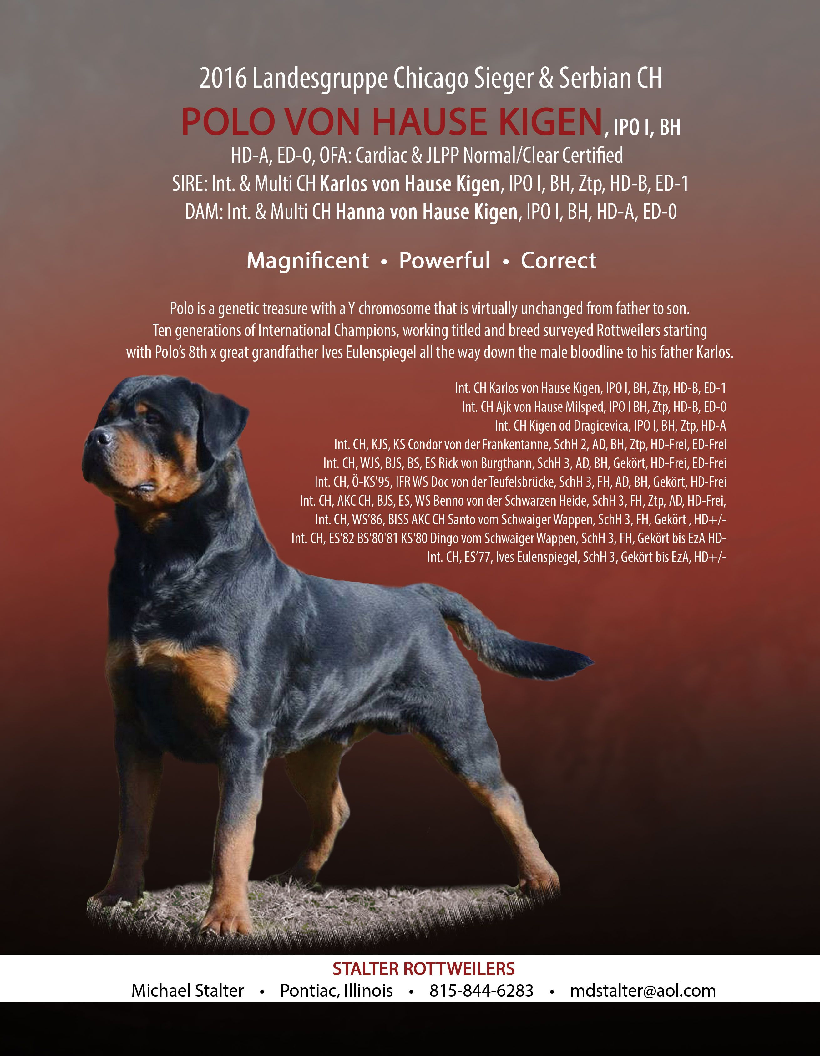 Pin By Total Rottweiler Magazine Ltd On Total Rottweiler Magazine