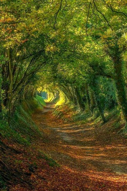 If Light At End Of Tunnel Is Green You >> Google If You Came Out The End Would You Be Reborn Into The