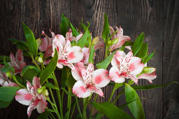 Alstroemeria Flower Meaning Flower Meaning Flower Meanings Alstroemeria Flowers