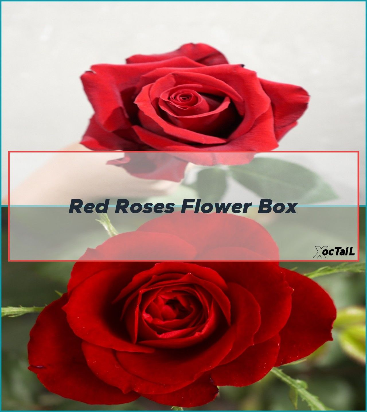 Red Roses Flower Box Rose Roses Flower York Musings Inkspired Month Today In 2020