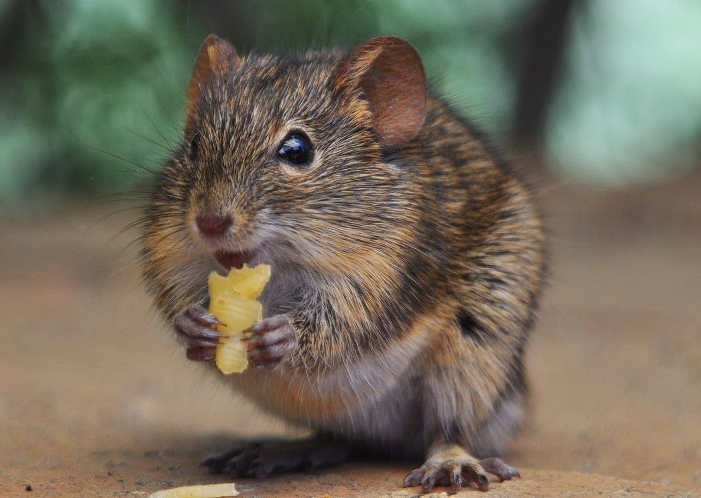 Keep your kitchen crumbfree. Food lures mice and roaches
