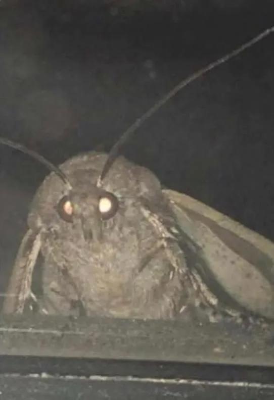 The Blindonator 5000 Reading Meme Moth Quality Memes