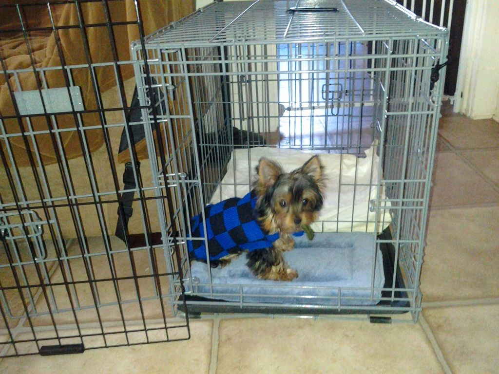 Pin By Amber Fairweather On For The Home Dog Potty Training Puppy Training House Training Dogs