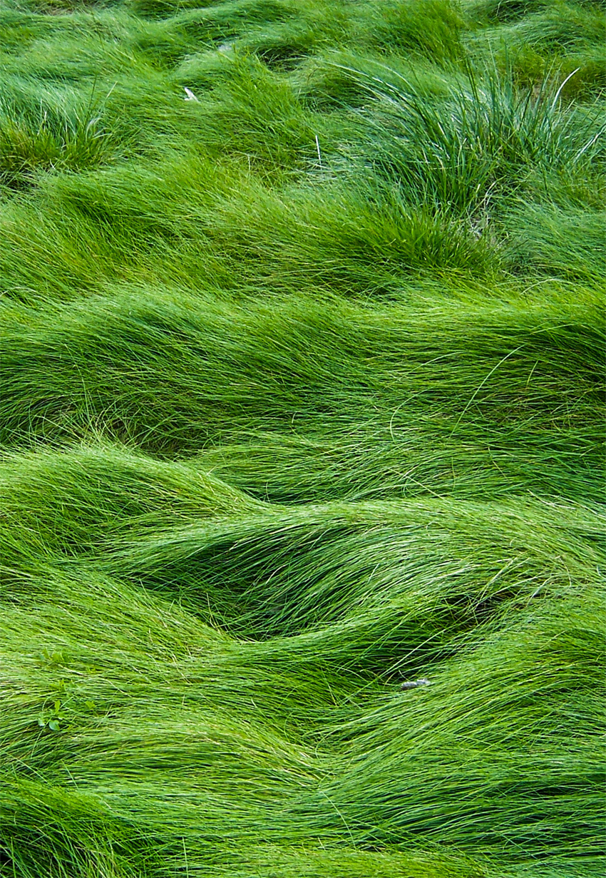 I love this fescue grass in certain areas instead of for Like long grasses
