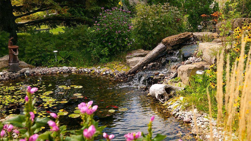am nagement paysager champ tre d 39 un bassin d 39 eau naturel am nagement cours pinterest eau. Black Bedroom Furniture Sets. Home Design Ideas