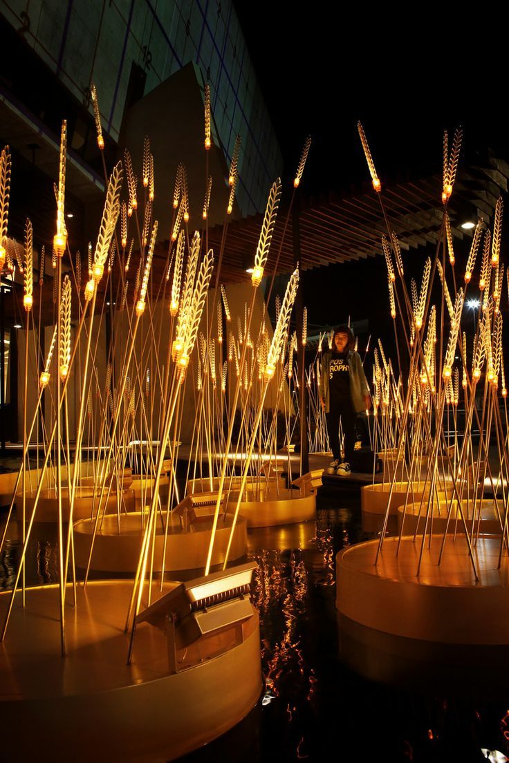Apostrophy S Lights Up Golden Hued Straws For Royal Rice Field