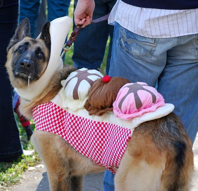 19 Costumes That Prove German Shepherds