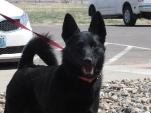 Adopt Rudi On Rescue Dogs Dogs Adoption
