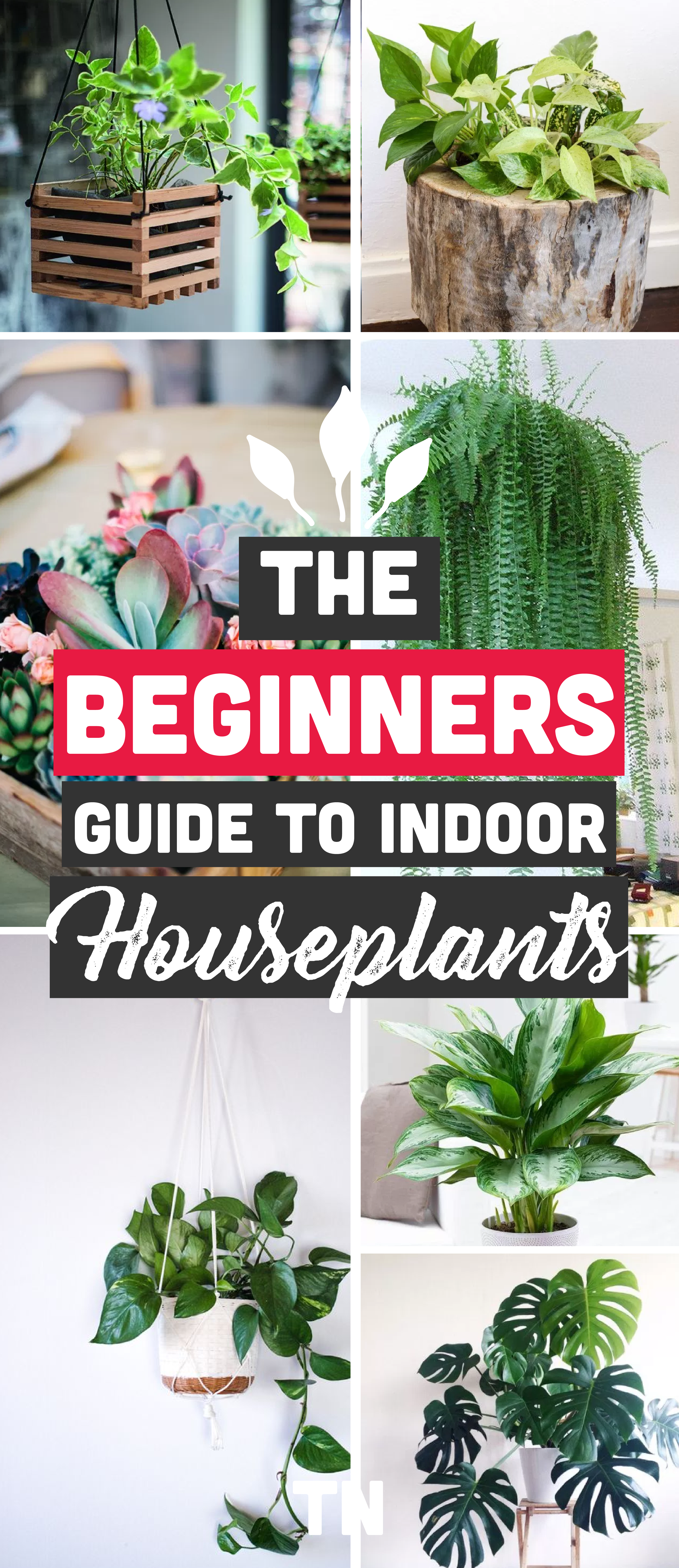 The Best Indoor Plants For Clean Air And Low Light Settings 11 Genius Potting Ideas