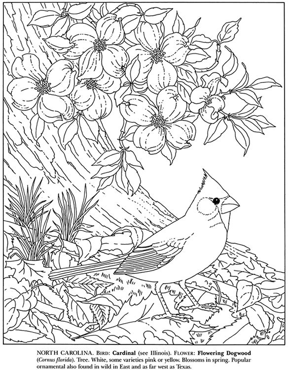 - State Birds And Flowers - (doverpublications) (With Images) Bird Coloring  Pages, Flower Coloring Pages, Coloring Pages