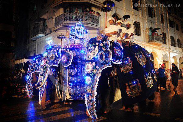 Street dancing with elephants - Buddhist festival in Kandy, Sri lanka