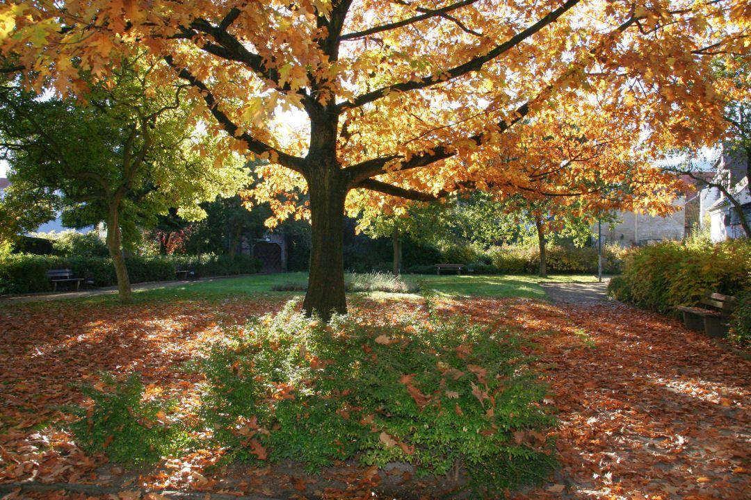Herbst Im Ulrichu0027schen Garten An Der Breiten Strasse In Der Unterstadt Von  Goslar
