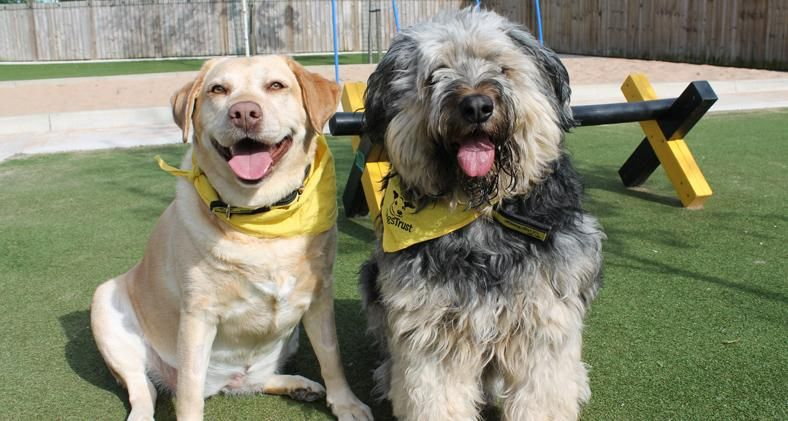 Forever Friends In Search Of Forever Home Together Dogs Trust The Search Is On For A Forever Home For Two Four Legged Fr Dogs Trust Charity Dogs Trust Dogs