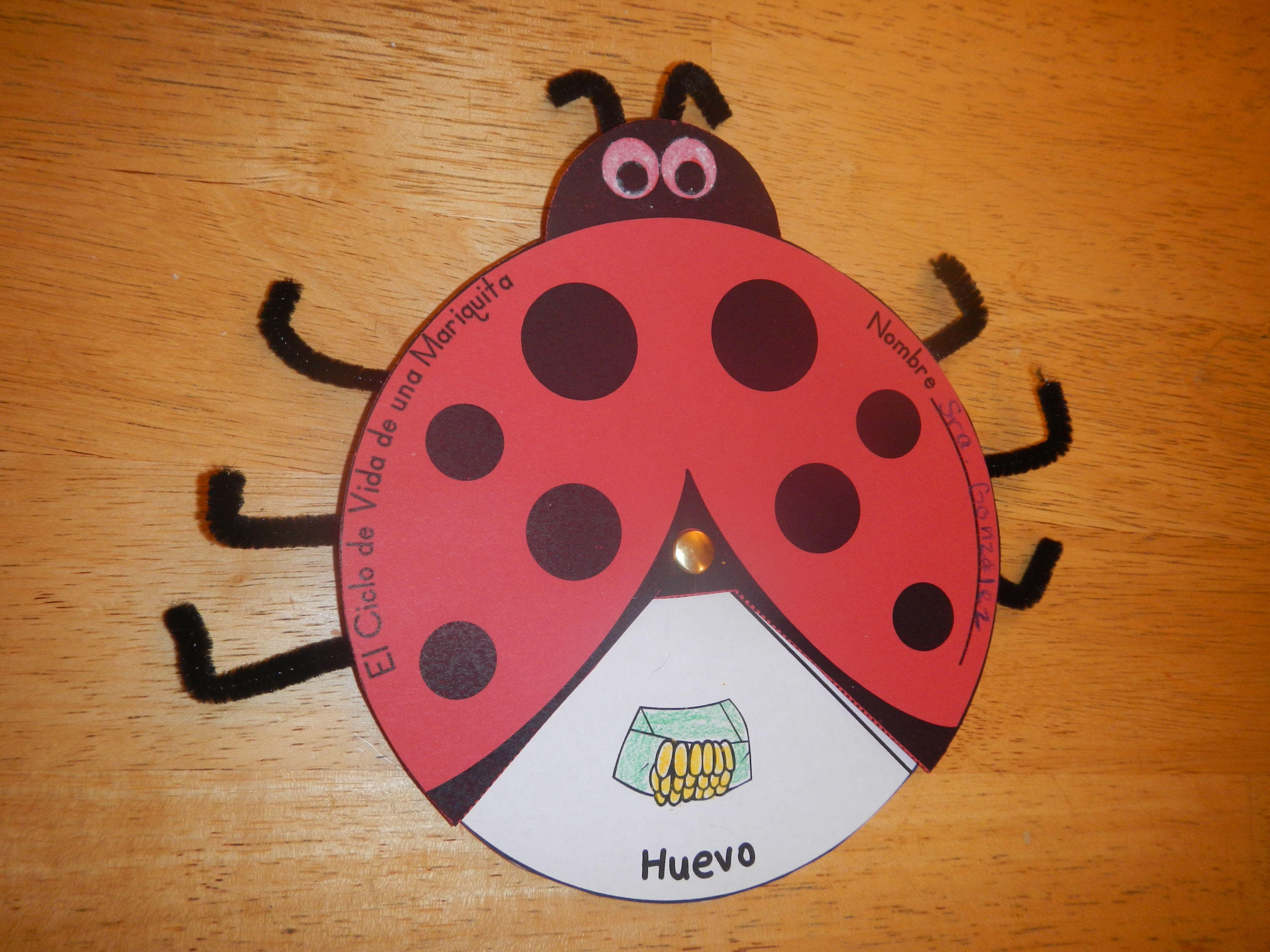 Ladybug Life Cycle Wheel Craftivity Bilingual