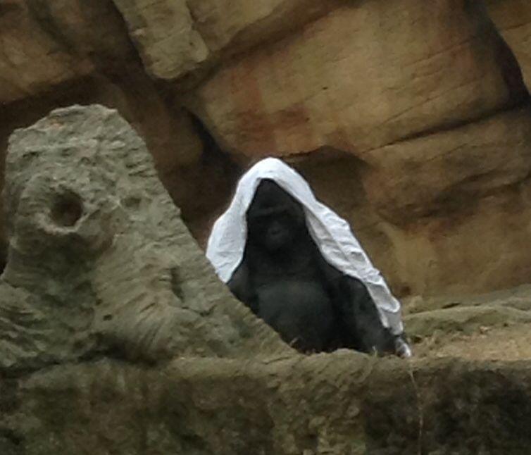 Memphis Zoo, Memphis, Animals