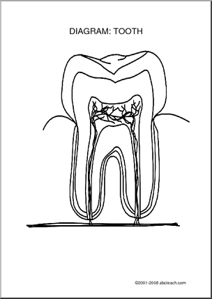 Diagram: Tooth (unlabeled)  Label the parts of the tooth