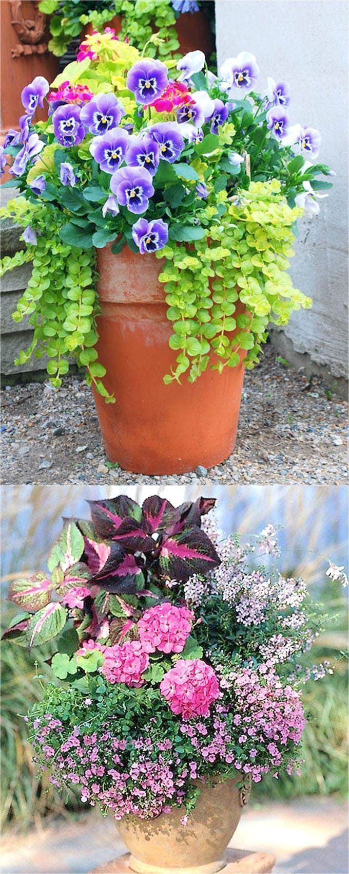 Colorful Flower Gardening In Pots Made Easy With 38 Best Designer Plant List For Each Container And Sun Vs Shade Locations Grow A Beautiful Garden