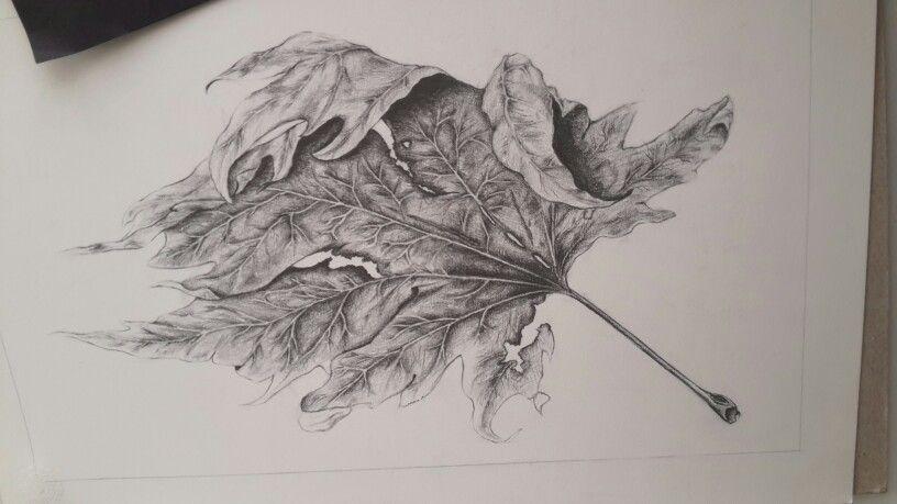 yaprak dokusu