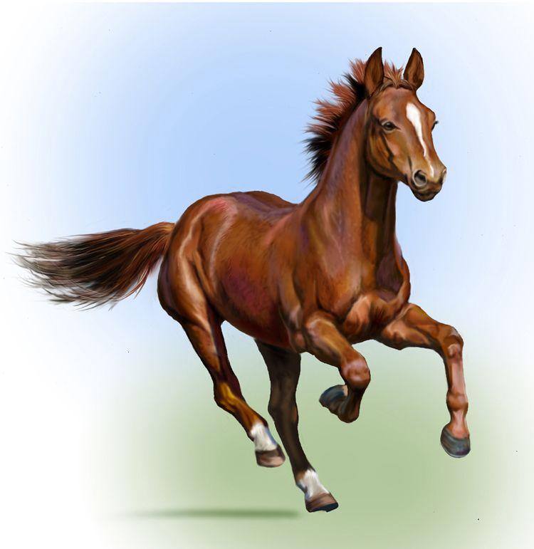 Лошадь в картинках для детей, родителей первоклассников сентября