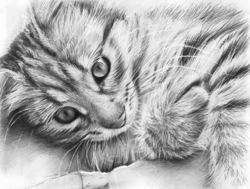 How to draw realistic cats google search