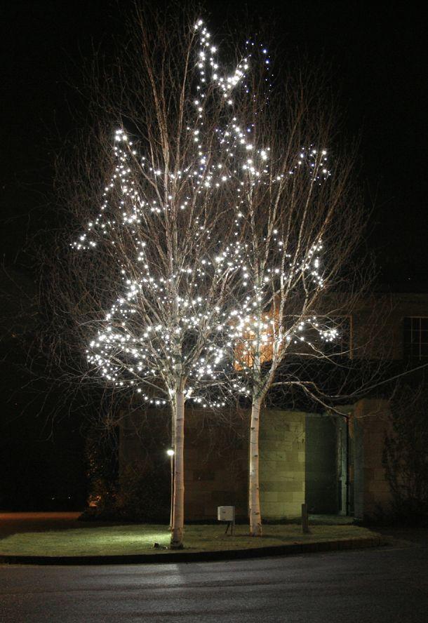Christmas Lights Holiday Season Christmas Lights