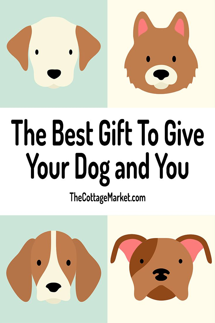 The Best Gift To Give Your Dog And You Pet Care Dogs Embrace