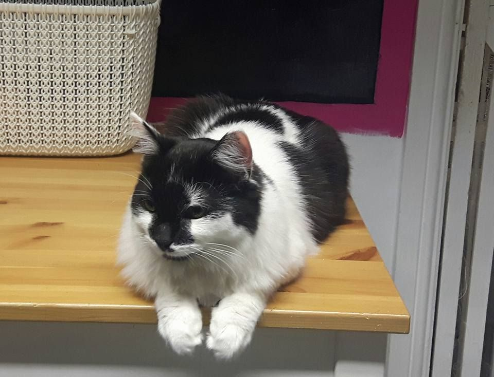 The Mog On The Tyne Cat Cafe In Newcastle Funny Cute Cats Cute Animals Fluffy Cat