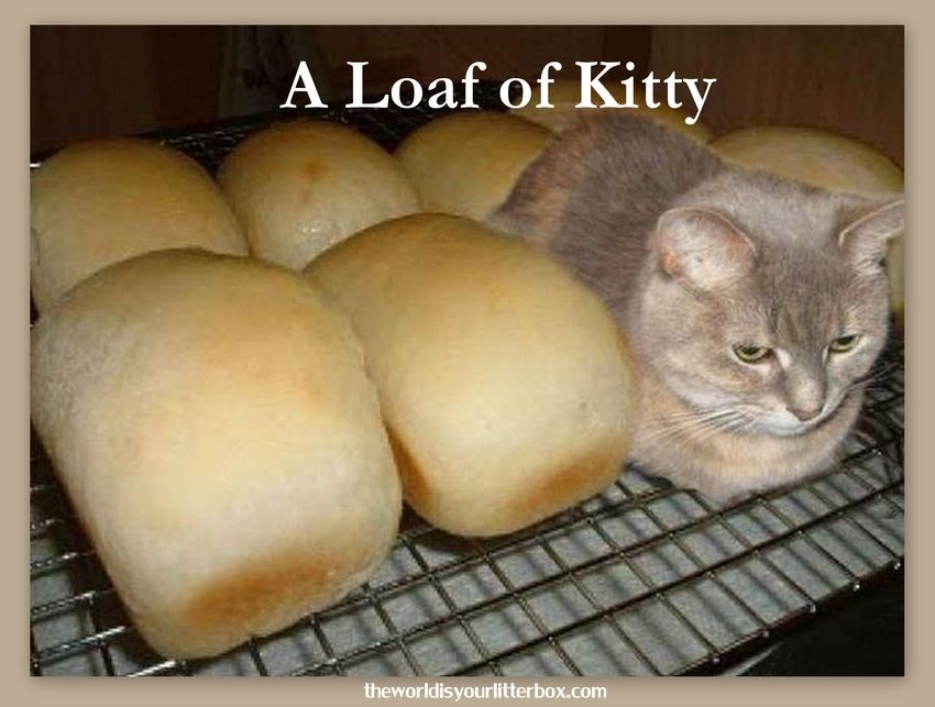 Cat In Bread Box Unique A Loaf Of Kitty Comical Cute Cats Pinterest Litter Box And Cat