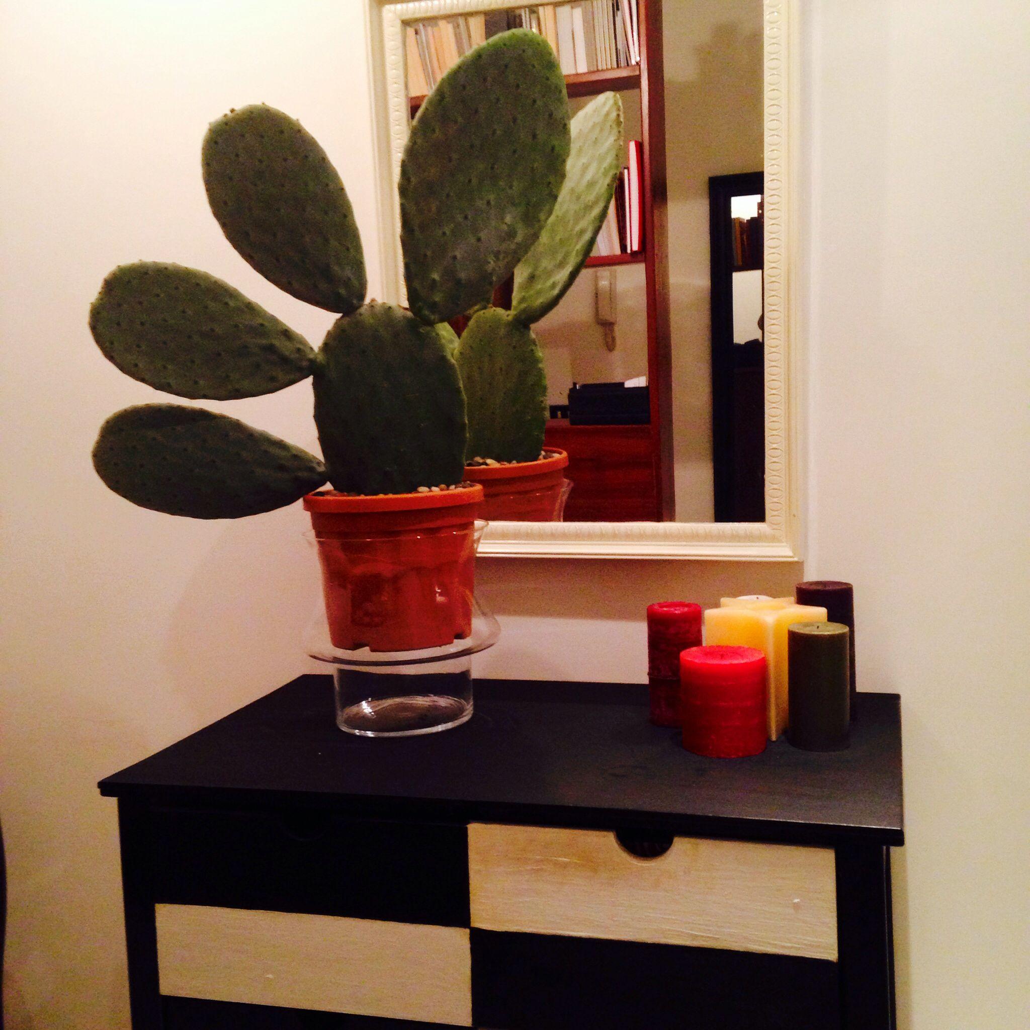 Kaktus!!!