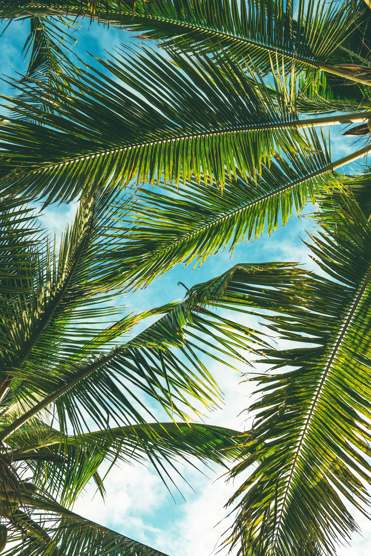 Tropical Views Persici Bay Folhas de coqueiro, Ideias