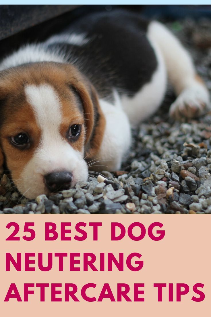 25 Best Dog Neutering Aftercare Tips Dog spay, Dogs