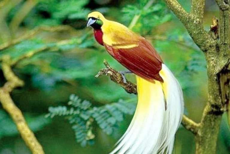 Pin Em Burung