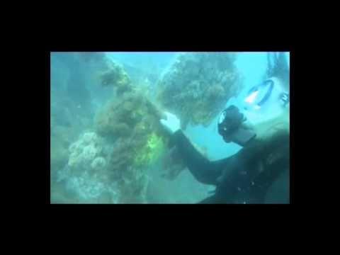 Buceo en el Golfo San Matías. Las Grutas, Río Negro