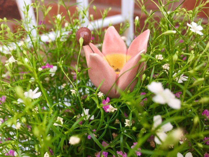 3debf38684a29d0c7f8ad095ba30cd39 - Roberta's Unique Gardens Coupon Code