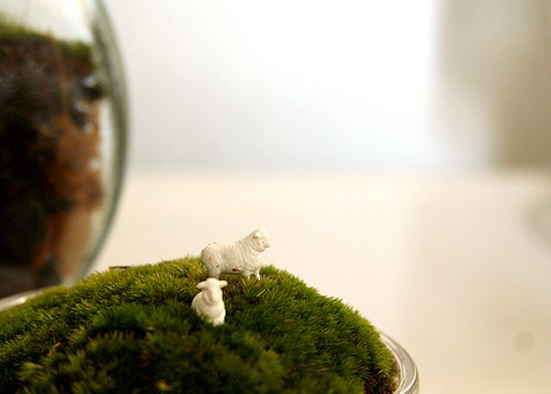 thepeagreenboat_TwigTerrariums_09