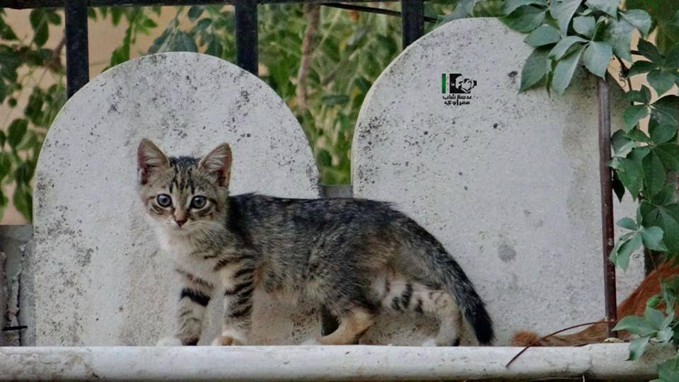 معرة النعمان Animals Cats City