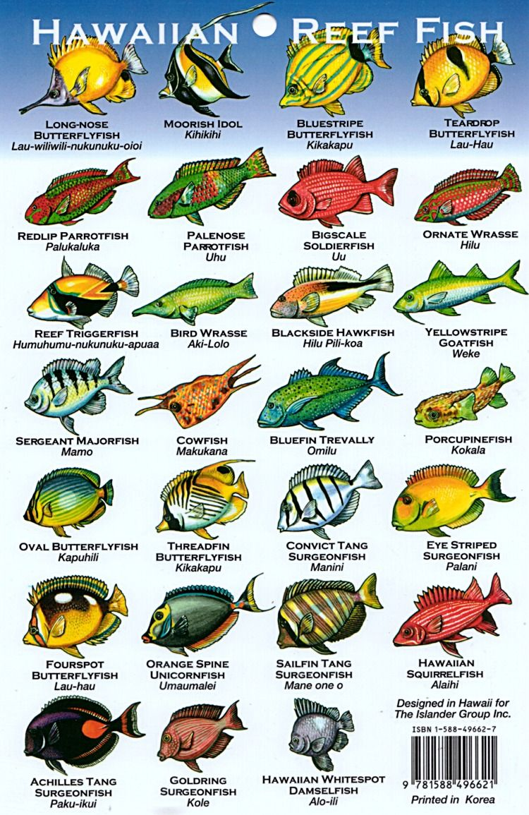 Freshwater fish of hawaii - Hawaii Reef Fish Chart The Crazy Thing Is That These Illustrations Don T Even