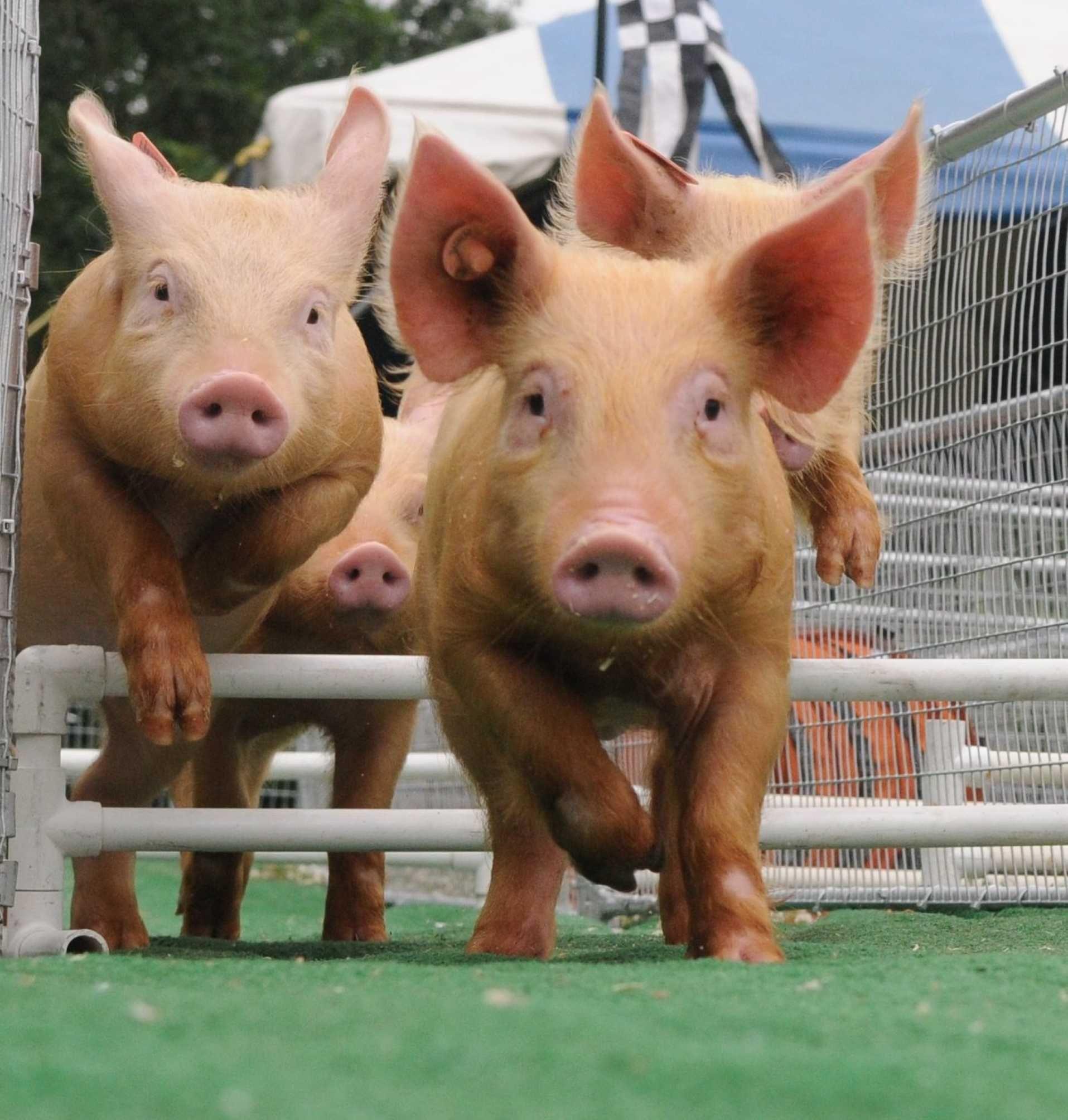 This week's top photos Animals, Photos of the week, Long