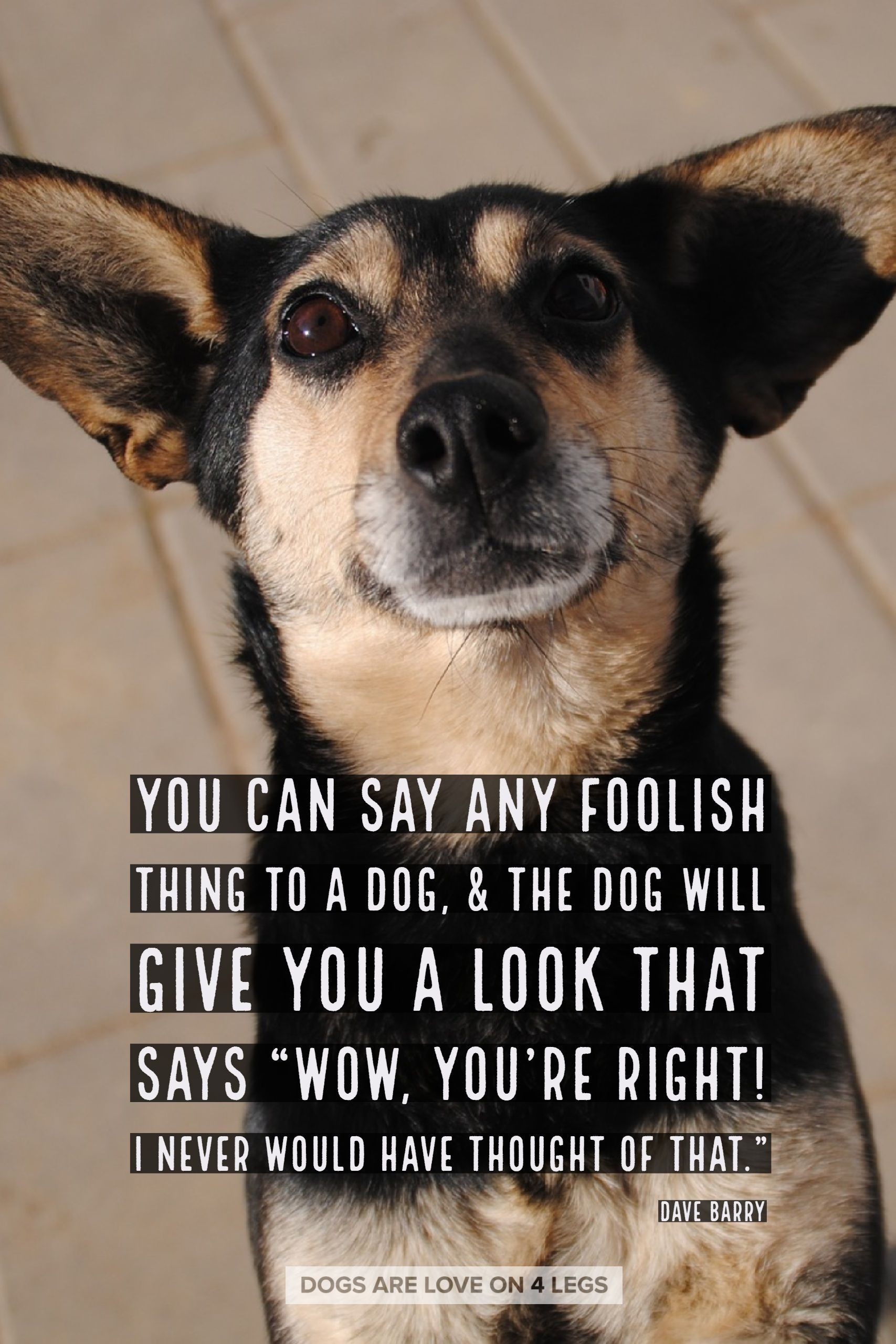 Dog Quote You Can Say Any Foolish Thing To A Dog Dog Dog