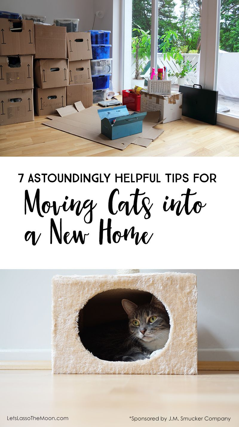 7 Astoundingly Helpful Tips for Moving With Cats into a