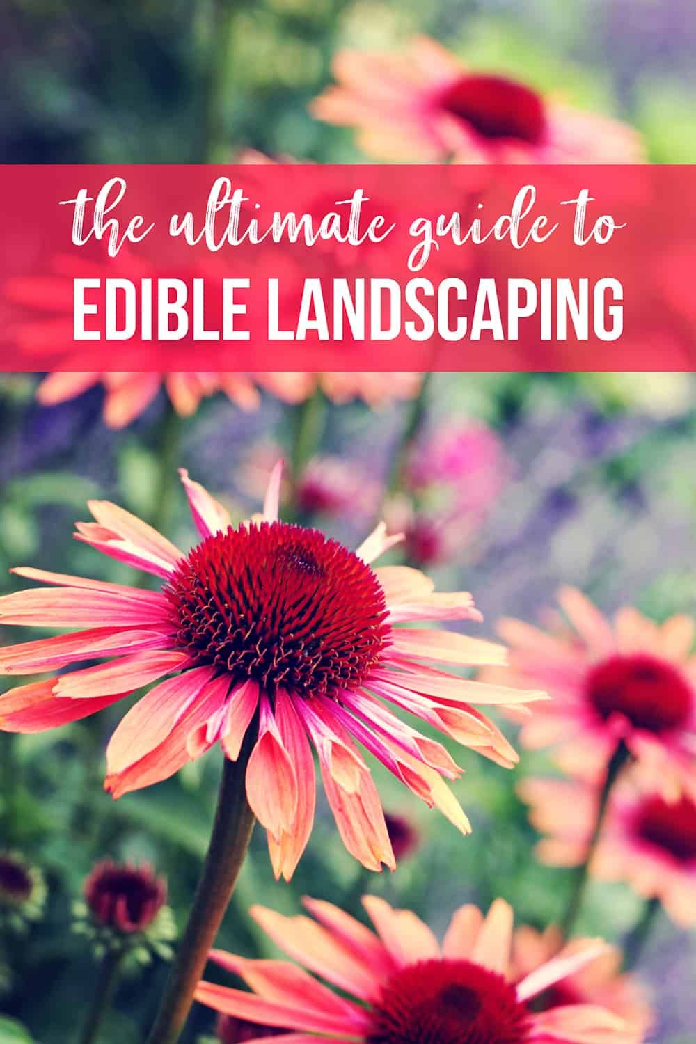 The Ultimate Guide to Edible Landscaping (Must Read Edible Landscaping Ideas) #ediblegarden