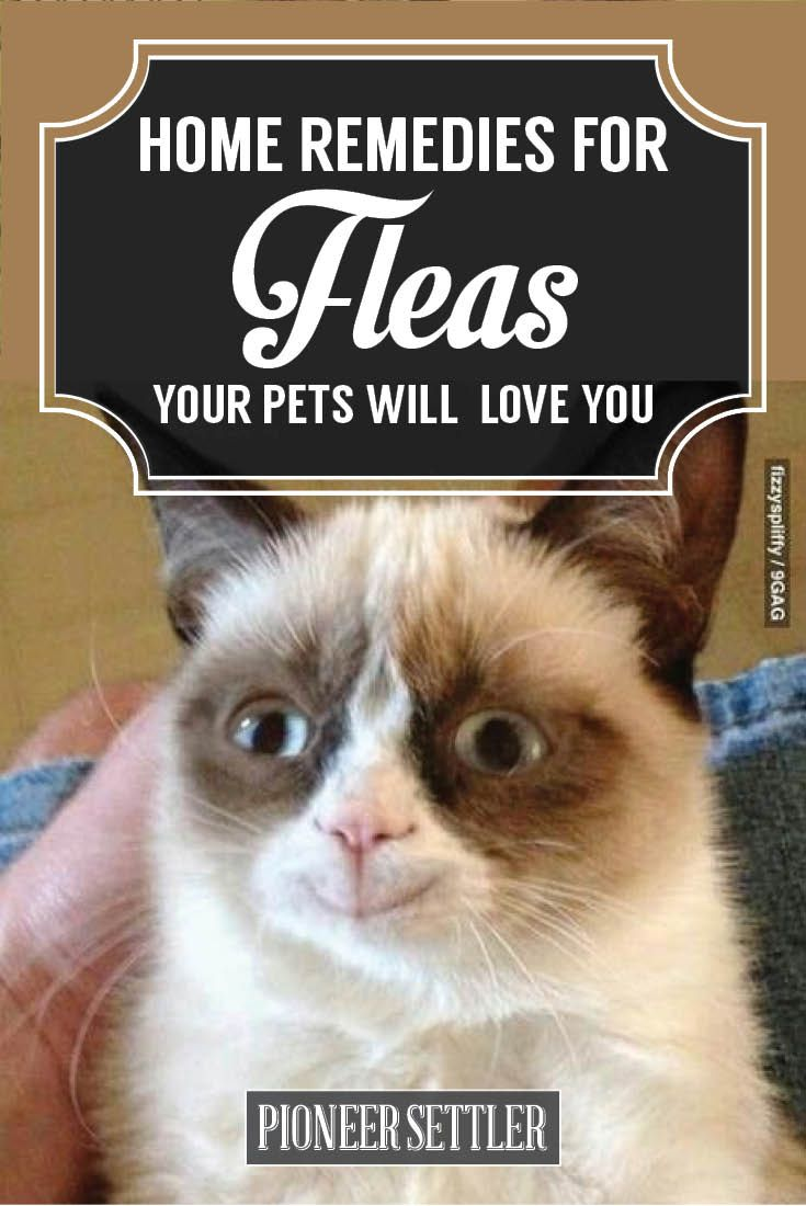 Basic home remedies for fleas protect your pets flea